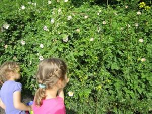 Ogród pełen tajemnic – zajęcia w plenerze